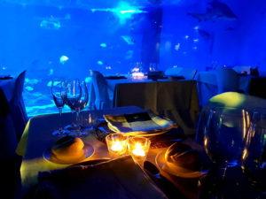Cenando entre Tiburones